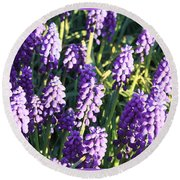 Purple Grape Hyacinth  Round Beach Towel