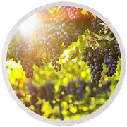 Purple Grapes In Sunshine Round Beach Towel