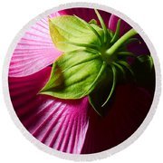 Purple Hibiscus Shot From Behind. Round Beach Towel