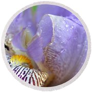 Purple Iris - 3 Round Beach Towel