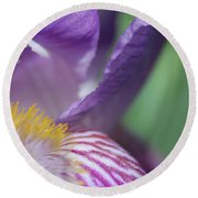 Purple Iris 1 Round Beach Towel
