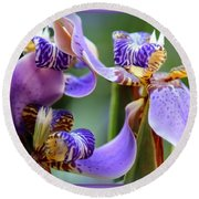 Purple Irises Closeup Round Beach Towel