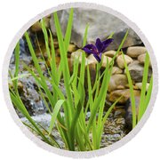Purple Irises Growing In Waterfall Round Beach Towel