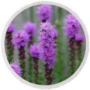 Purple Liatris Flowers Round Beach Towel