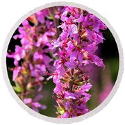 Purple Loosestrife Tall Round Beach Towel