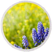 Blue Muscari Mill Bunches Of Grapes Close-up  Round Beach Towel