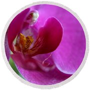 Purple Orchid Exploration  Round Beach Towel