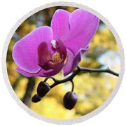 Purple Orchid In September Sun Round Beach Towel