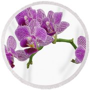 Purple Orchid-3 Round Beach Towel