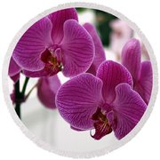 Royal Orchids  Round Beach Towel