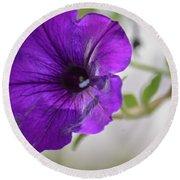 Purple Petunia 2013 Round Beach Towel