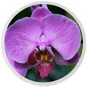 Purple Phalaenopsis Orchids Round Beach Towel