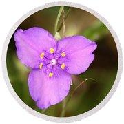 Purple Spiderwort Wildflower Round Beach Towel