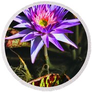 Purple Star Water Lily  By Diana Sainz Round Beach Towel