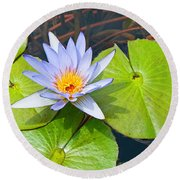 Purple Water Lily In Pond. Round Beach Towel