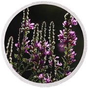 Purple Wild Flowers - 2 Round Beach Towel