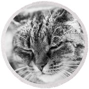 Purring Cat Round Beach Towel