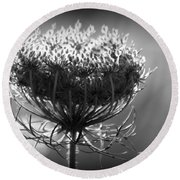 Queen Annes Lace - Bw Round Beach Towel