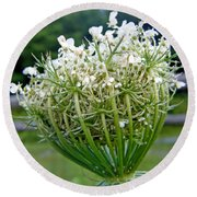 Queen Anne's Lace Flower Unfolded Round Beach Towel