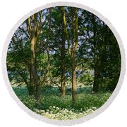 Queen Anne's Lace Makes A White Carpet In The Woods Near Rutland Round Beach Towel