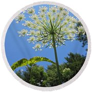 Queen Anne's Lace Round Beach Towel