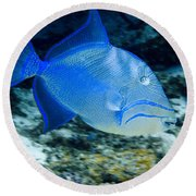 Queen Triggerfish Round Beach Towel