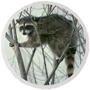Up A Tree Round Beach Towel