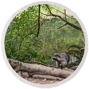 Raccoon At The Lake Round Beach Towel