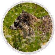 Raccoon In The Meadow Round Beach Towel
