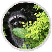 Raccoon Peek-a-boo Round Beach Towel