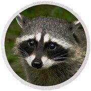 Raccoon Round Beach Towel