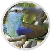 Racket Tailed Roller Round Beach Towel