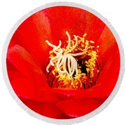 Radiant Red Cactus Flower Round Beach Towel