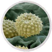 Ragweed Pollen Round Beach Towel