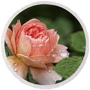 Rain Drenched Rose Round Beach Towel