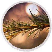 Rain Droplets On Pine Needles Round Beach Towel