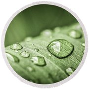 Rain Drops On Green Leaf Round Beach Towel by Elena Elisseeva