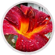 Rain Kissed Lilly Profile 1 Round Beach Towel