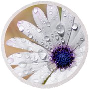 Rain Soaked Daisy Round Beach Towel