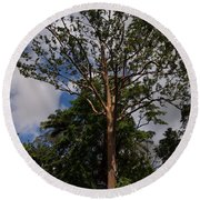 Rainbow Eucalyptus - Tall Proud And Beautiful Round Beach Towel