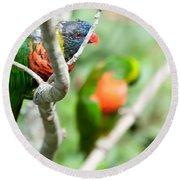 Rainbow Lorikeet Parrot Trichoglossus Haematodus Round Beach Towel