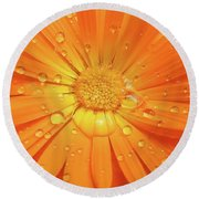 Raindrops On Orange Daisy Flower Round Beach Towel