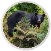 Rainforest Black Bear Round Beach Towel