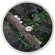 Rainforest Vegetation Moss And Fungi Round Beach Towel