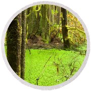 Rainforest Wetland Wildernis Of West Coast Bc Round Beach Towel