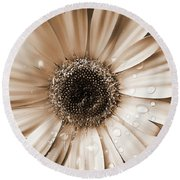 Raindrops On Gerber Daisy Sepia Round Beach Towel