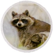 Rakish Raccoon  Round Beach Towel