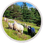 Ram And Ewes Round Beach Towel