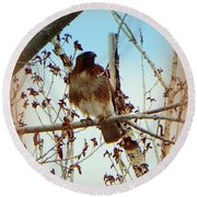 Raptor Perched Round Beach Towel