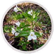 Rare Great White Trilliums Round Beach Towel